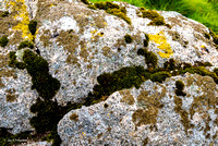 Lichen and Moss, Grey Wethers Stone Circles
