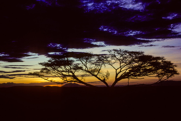 Thorn Tree and Sunset, Amboseli