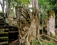 Calakmul - Structure 5, stela and tree