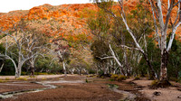 Ghost Gums, Trephina Gorge