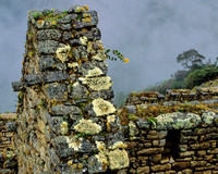 Lichen and Yellow Flower, Machu Pichu